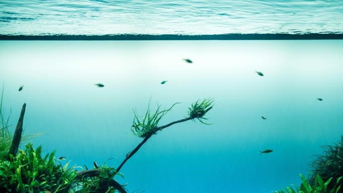 Plantas de acuario: ¿cómo las elijo?