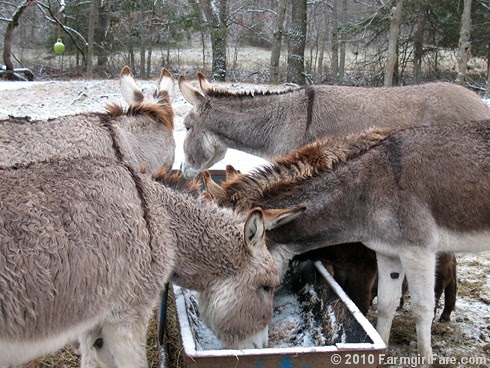 White Christmas Donkeys 3 - Farmgirl Fare