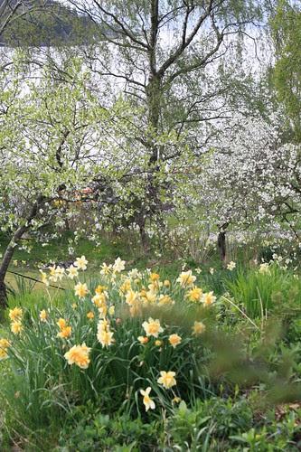 våren 2009 032
