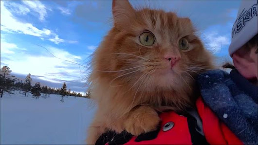 "Exclusive Video: Watch Norway's ""Skiing Cat"" in Action"