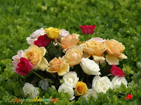 Beautiful Love Flowers