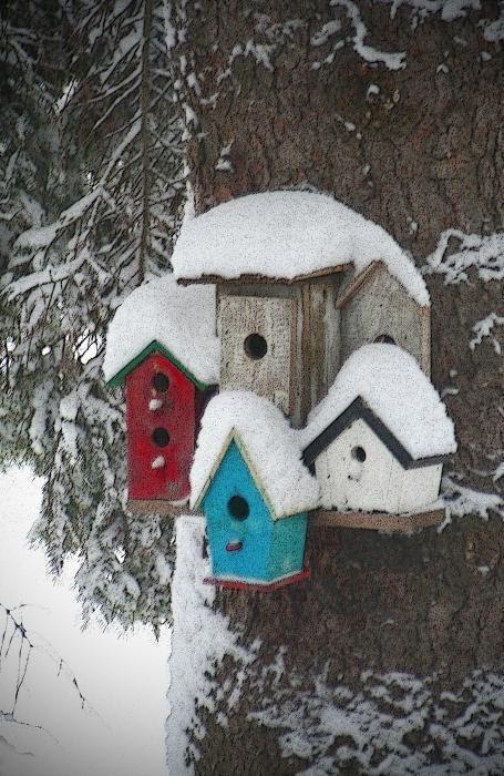 Winter Birdhouses Print by Octane Creative | FanPhobia - Celebrities Database
