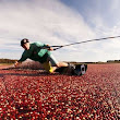Cranberry-Covered Extreme Sports