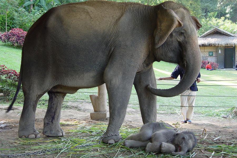Sites like elephant tube