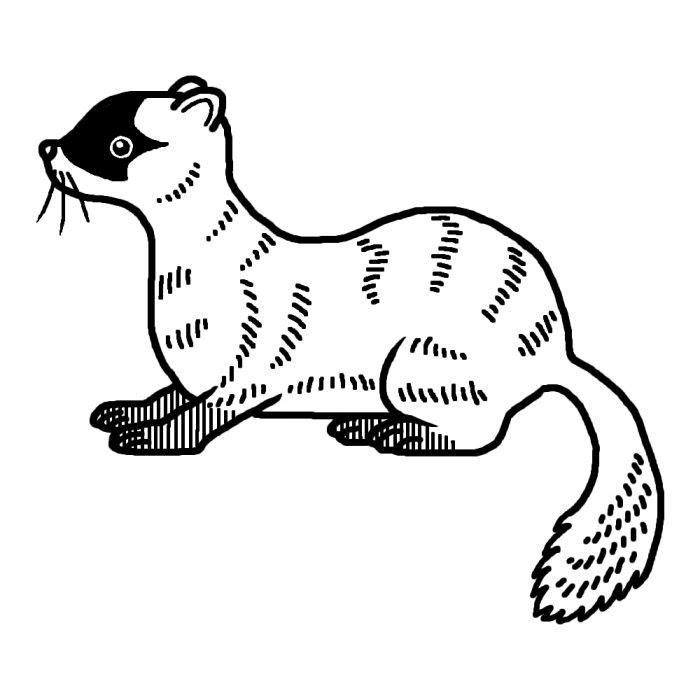 イタチ1白黒陸の小さな動物無料イラスト素材