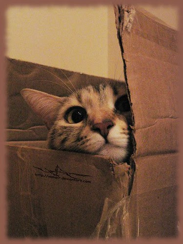 cypher - box kitty - nosey