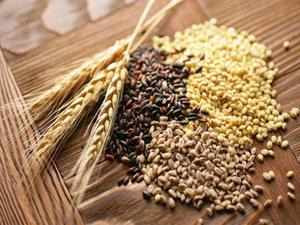 Production of pulses down 64%, cereals 30% in state