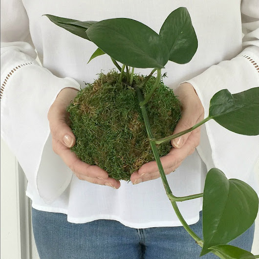 DIY Kokedama - Japanese Moss Ball Planters - Sand and Sisal