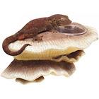Zilla Mushroom Feeding Ledge Reptile Decor 1 Count