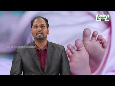 12th Bio Zoology Reproductive Health Part 3 Kalvi TV