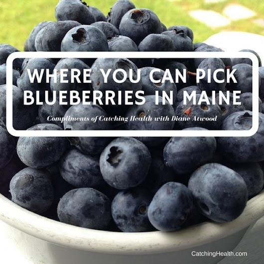 Where you can pick blueberries in Maine