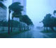 palm trees swaying in hurricane-force winds