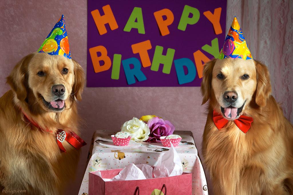 BZ Dogs: Happy Birthday