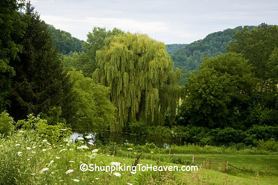 Weeping Willow on Pond, Richland County, Wisconsin