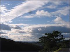 88 sky and tree