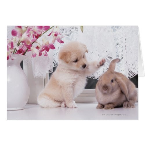 Puppy And Easter Rabbit | Funny Photo Greeting Card