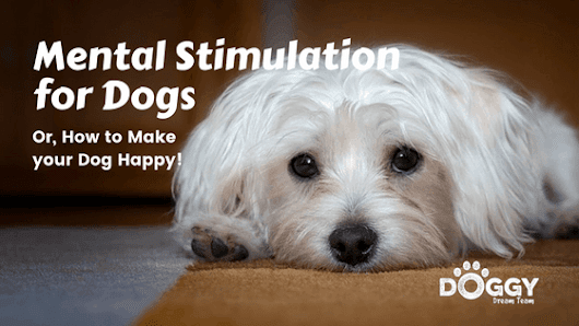 Mental Stimulation for Dogs. Stop Destructive Behaviour within the Home