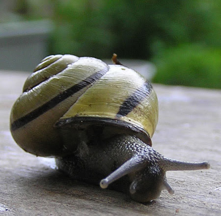 http://www.monalisadepijamas.com.br/wp-content/uploads/2009/04/escargot.jpg