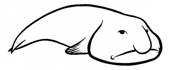 How To Draw Blob Fish Sketch Coloring Page