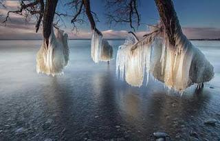 مياه تتجمد على الاشجار في بحيرة أونتاريو - شاهدوا المنظر الابداعي « إكتشف