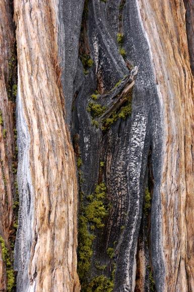 2inside-a-tree.jpg