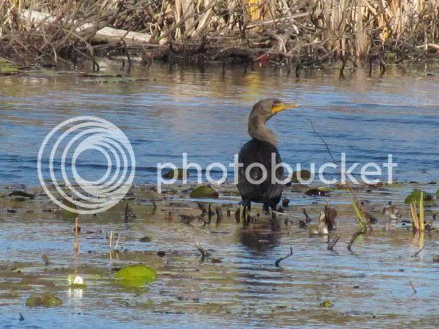 photo 2012-10-10225316_zps120327d6.jpg
