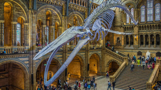 The Science Museum And The Natural History Museum Are Fighting On Twitter, And It's Amazing