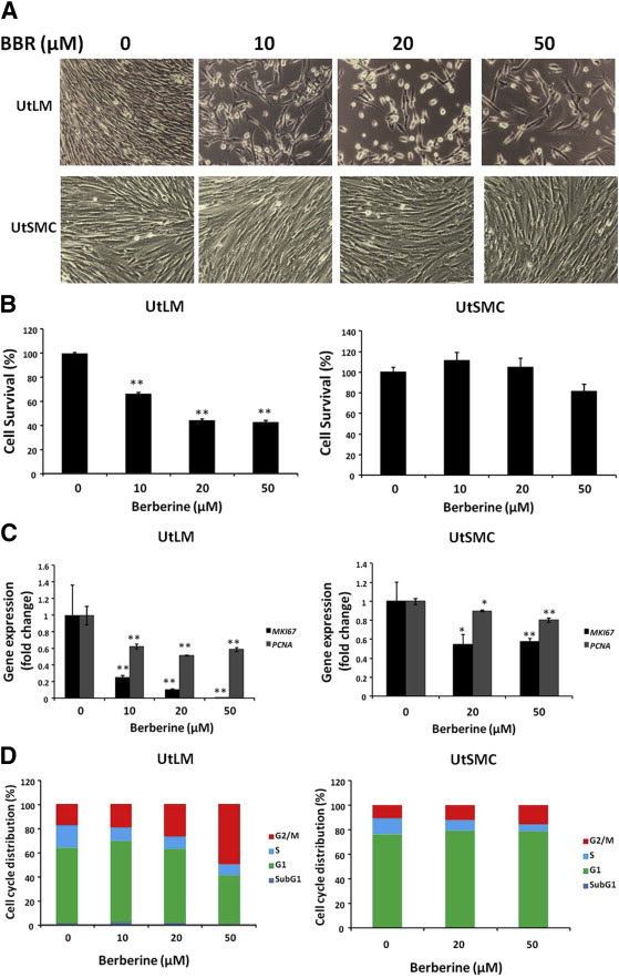 BBR inhibits cell proliferation and induces cell cycle arrest in UtLM and UtSMC ...