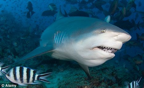 Breakthrough: A compound found in sharks could protect humans from a range of diseases