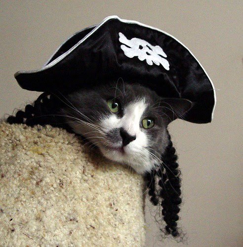 Bowie pirate