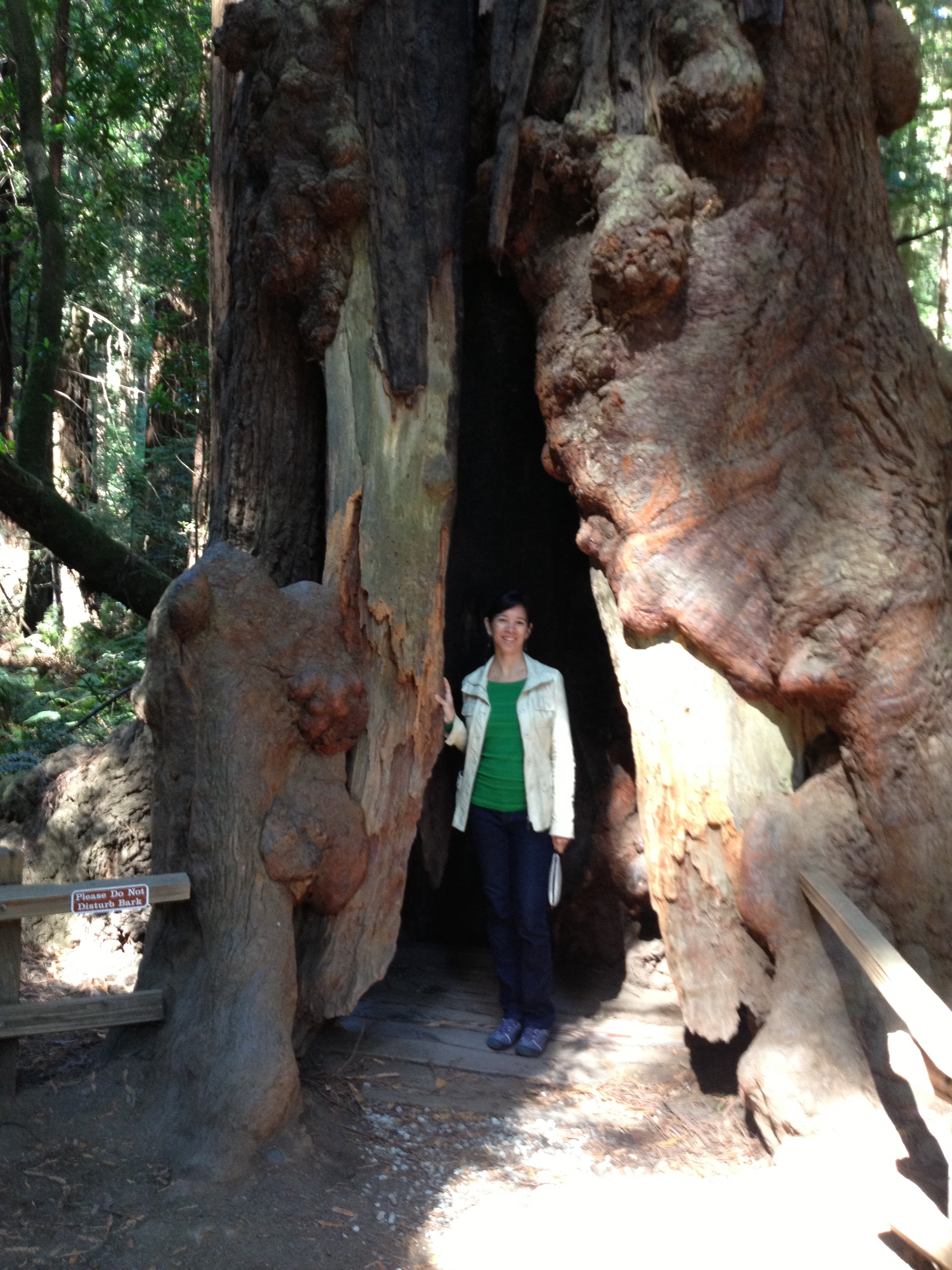 Muir Woods - September 2013