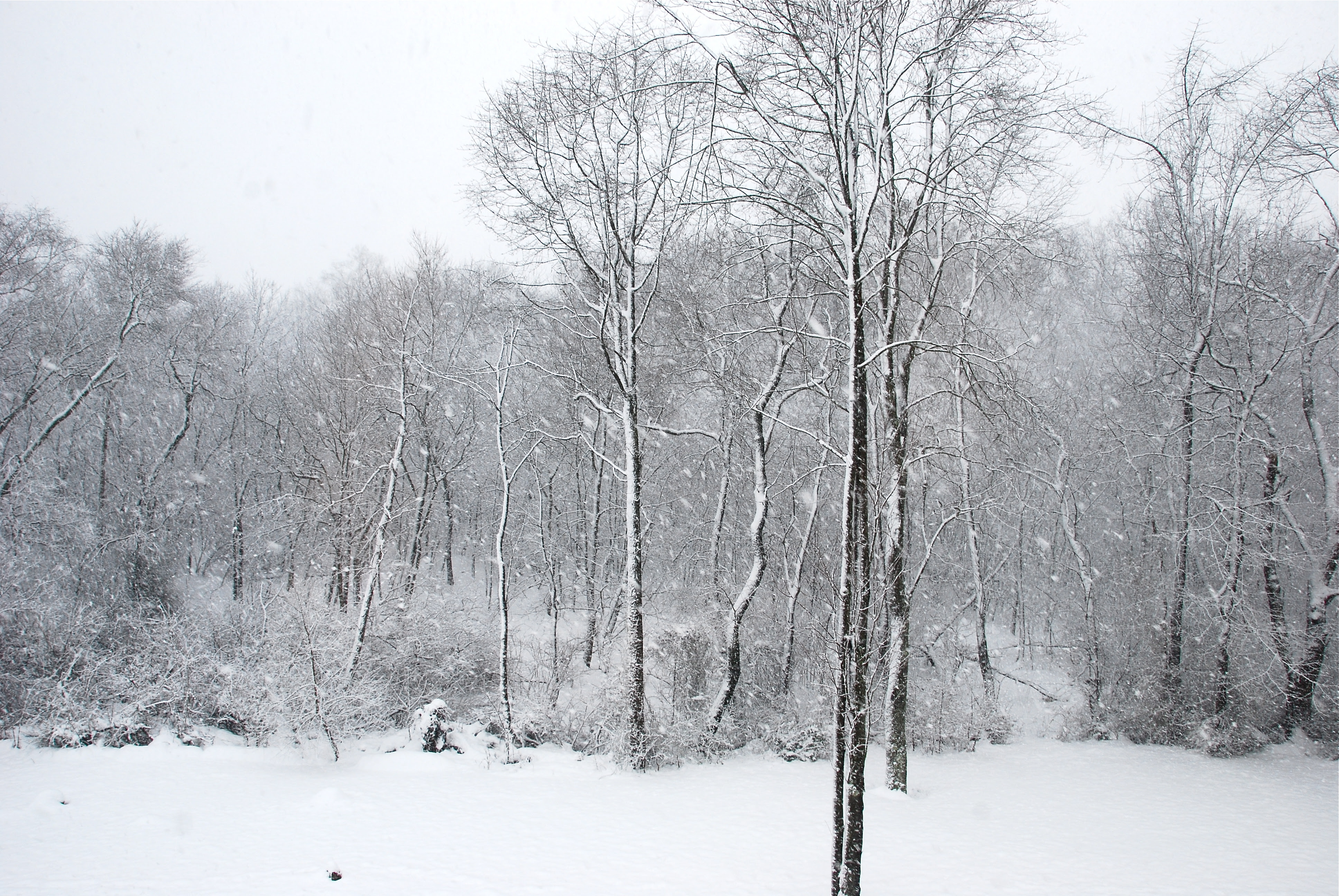 Snow in my backyard