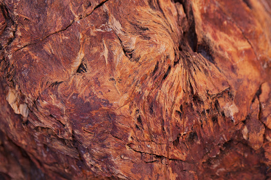 Petrified Wood – Petrified Forest National Park, Arizona