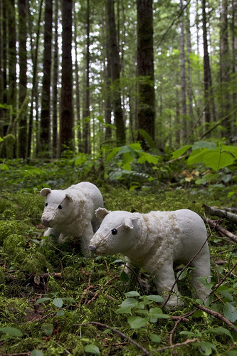 spirit bears in the rainforest