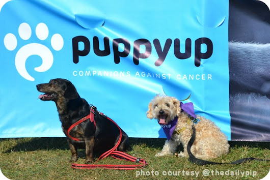 Puppy Up Chicaago Inaugural Walk Funds Canine Cancer Research
