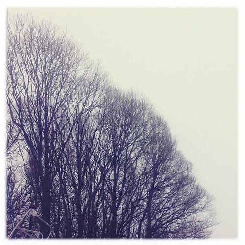 trees :: trær