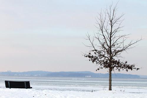 tree needs company