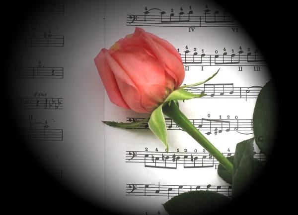 Bouton de rose couché sur notes de musique