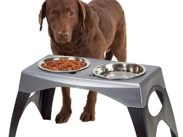 ¿Es beneficioso el plato elevado de tu perro?