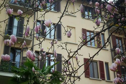 Le finestre con i boccioli di magnolia by Ylbert Durishti