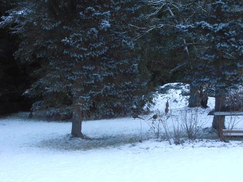 talvi 2013 081