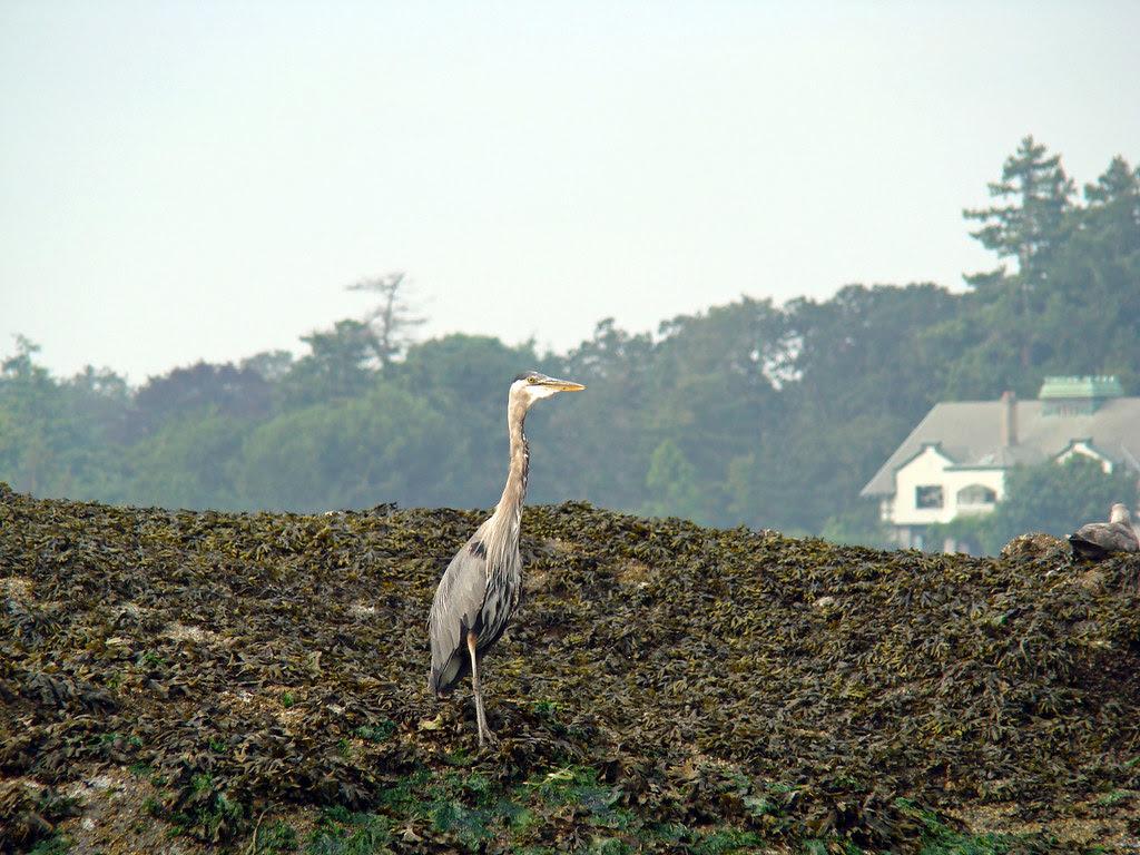 2009-08-17 Cadboro Bay 022