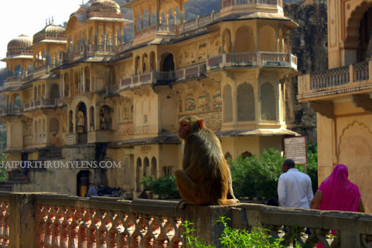 The Captivating Monkey Temple At Galtaji
