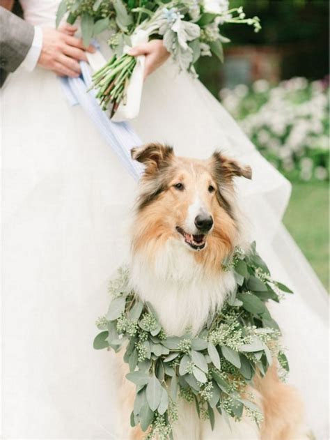 How to Dress your Pets for the Wedding