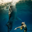 Whale Shark Fashion Shoot – World First! | Blue Sphere Media