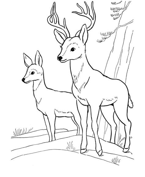 deer coloring page wild animal buck deer coloring pages