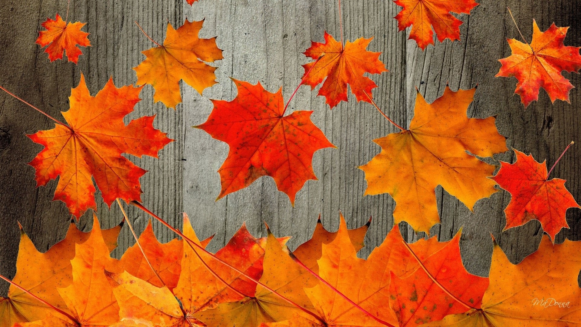 Free Fall Background Images For Computer Wattnewis