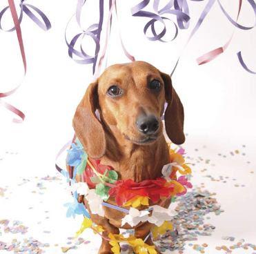 Feliz cumpleaños con animales