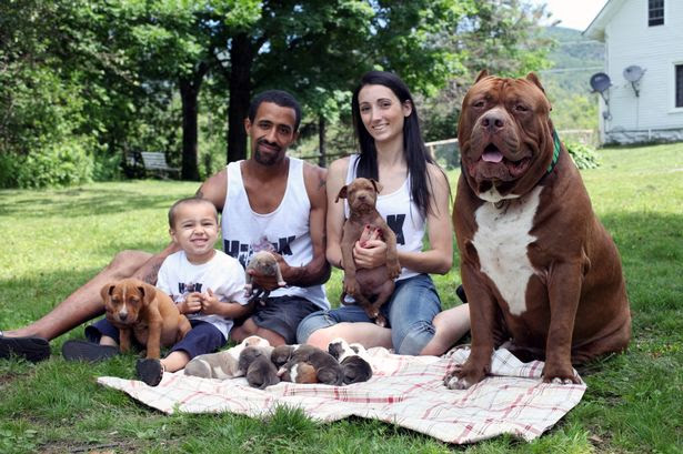 Marlon, Lisa and Jordan Grennan with Hulk with his 5 week and his 6 day old puppies