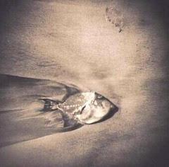 John Bailey - Fish